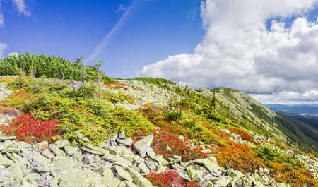 bilberries: Mountain autumn landscape with the slope of the ridge, scatterings of stones, low-growing shrubs of bilberries with red leaves, thickets of mountain pine and sky with clouds