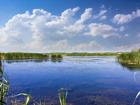 Lake, overgrown with reeds and water lilies on a background of forest and sky with clouds in the summer sunny day