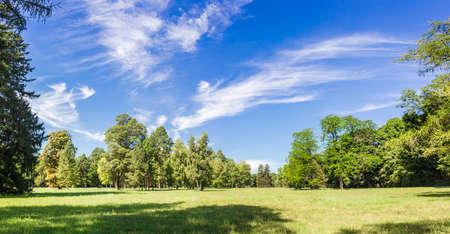 cirrus clouds: Large clearing in the park among the conifers and deciduous trees on the sky with cirrus clouds in the summer on a sunny day