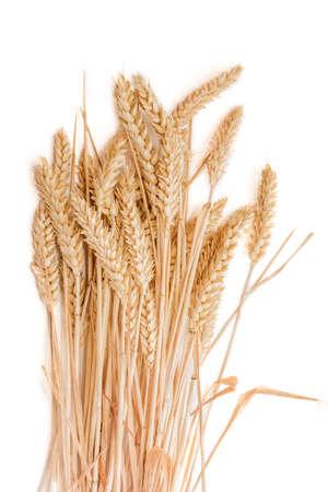 Sheaf of ripe wheat ears on a light . Isolation.
