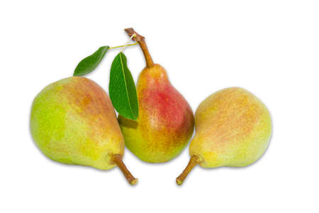 protected plant: Three ripe pear Bartlett with two leaves on a light background. Isolation.