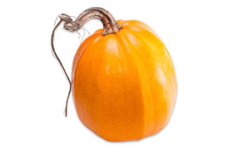 haulm: Yellow-orange pumpkin with haulm on a light background. Isolation.