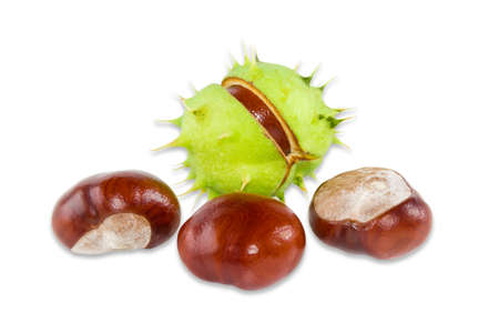 horse chestnut': One ripe horse chestnut inside its green husk and several shelled chestnuts on a light background. Isolation.