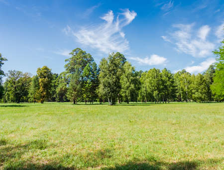 Glade in the park on the background of the conifers and deciduous trees and a sky with cirrus clouds in the summer on a sunny day