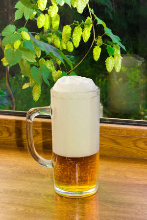 humulus lupulus: Glass of beer on a wooden window sill on the background branches with hops outside the window