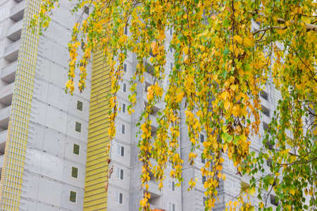 multi storey: Birch branches with yellowing leaves on a background of multi storey building under construction