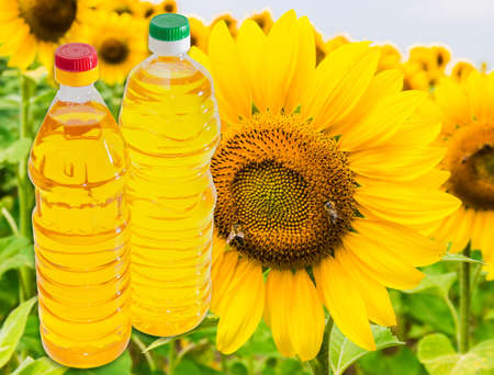 unrefined: Bottle of unrefined sunflower oil and bottle of refined sunflower oil against the background of a flower sunflower
