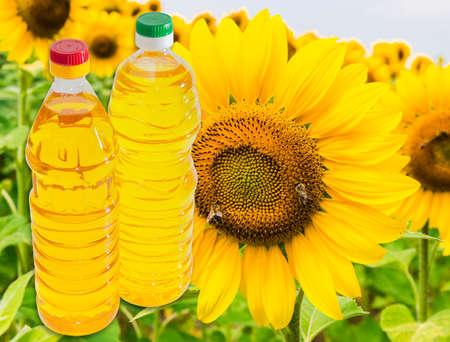 unrefined: Bottle of unrefined sunflower oil and bottle of refined sunflower oil against the background of a flower sunflower