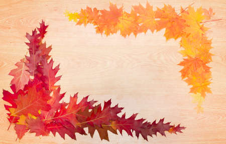 perimeter: Red, orange and yellow fallen leaves of a red oak and maple, laid out on the perimeter of a wooden surface with the texture of oak, as a frame with empty center part