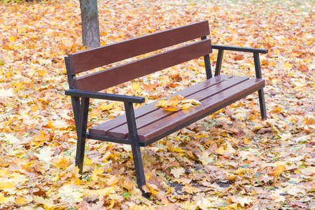 garden bench: Garden bench, made of steel frame and brown wooden planks among fallen leaves of maple autumn