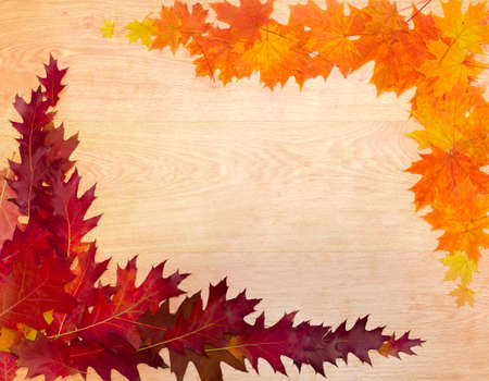 perimeter: Red, orange and yellow fallen leaves of a red oak and maple, laid out on the perimeter of a wooden surface with the texture of oak, as a frame with empty center part. Background