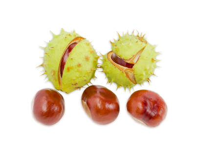 horse chestnut seed: Several ripe horse chestnuts, some of which are in its green cracked prickly shell on a light background. Isolation.