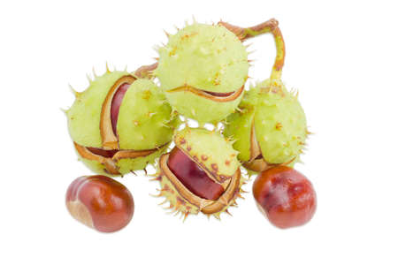 horse chestnut seed: Branch with several ripe horse chestnuts in its green cracked prickly shell and two cleared from husk chestnuts separately on a light background. Isolation.