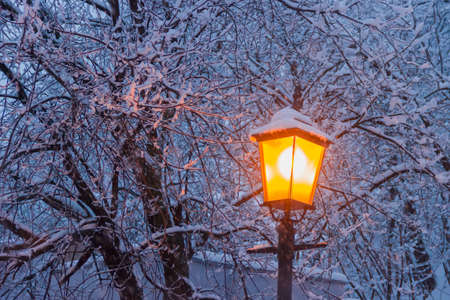 eventide: Street lamp on background of branches under snow during a heavy snowfall in winter eventide