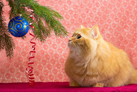 red cat: Branch of a Christmas tree with Christmas ornaments and red cat looking at the Christmas tree on a red background Stock Photo