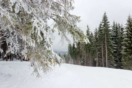 marked: Start of a ski marked piste among the spruce forest in cloudy weather Stock Photo