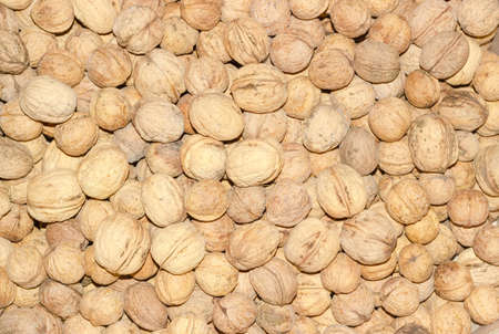 Background from the ripe whole freshly harvested walnuts in shell closeup