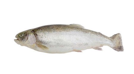 rainbow trout: Fresh raw rainbow trout on a light background