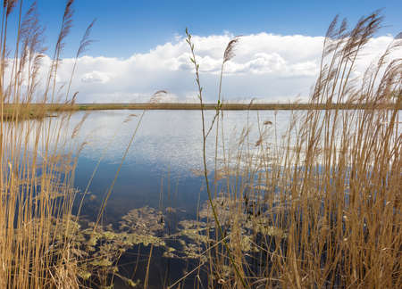 reed stem: Lake with coasts, overgrown with reeds and willow stalk in the center on the background of sky with clouds in spring sunny day