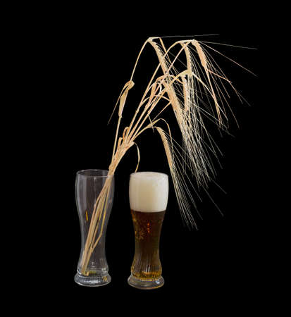 tipple: One beer glasses with lager beer and several barley spikes in empty glass on a black background