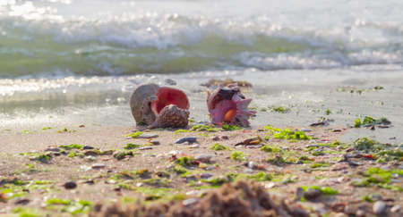 Several sea shells on a sandy beach against the sea in the morning