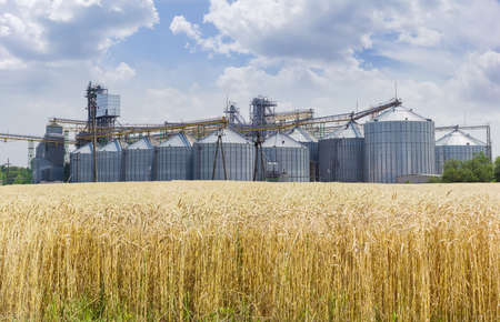 corrugated steel: Grain storage system with corrugated steel storage bins and grain distribution system on the background of sky with clouds and  field of ripe wheat in the foreground Stock Photo