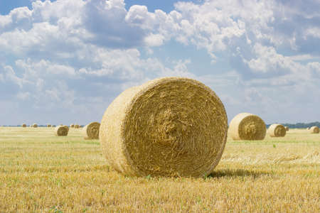 Large round straw bale of a barley on harvested field on a background of other bales and sky with clouds Stock Photo