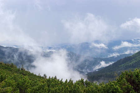 ridges: Mountain valley with clouds after the rain, mountain ridges covered by spruce forest and thicket of a mountain pine in the foreground Stock Photo