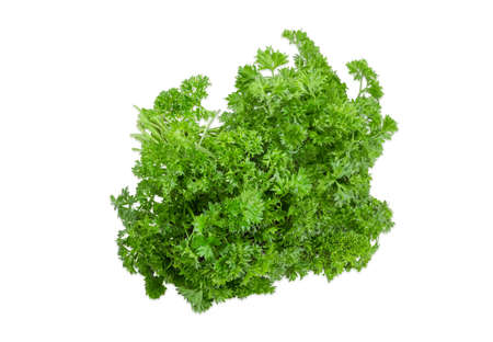 Bundle of fresh green curly leaf parsley on a light background