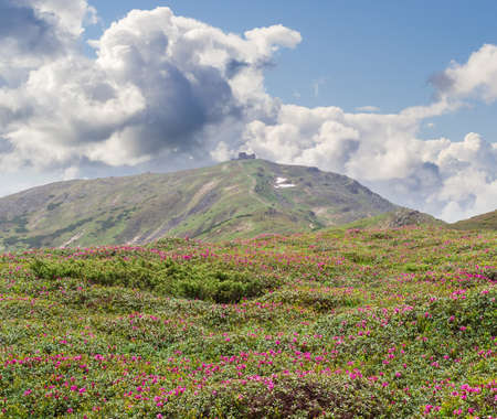 rocky mountain juniper: Alpine meadow with rhododendrons against the background of a sloping mountain peak with the ruins of the old observatory and sky with clouds Stock Photo