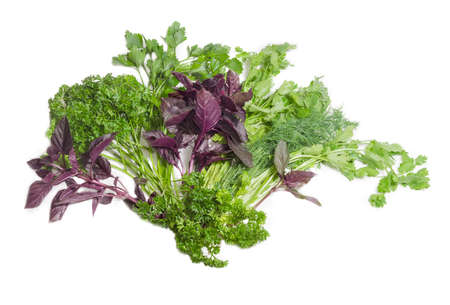 Bundle of fresh green dill, coriander, purple basil and two varieties of parsley on a light background