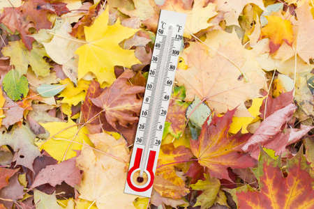 climatology: Alcohol thermometer for measurement of air temperature with Celsius and Fahrenheit scales on the wet fallen leaves