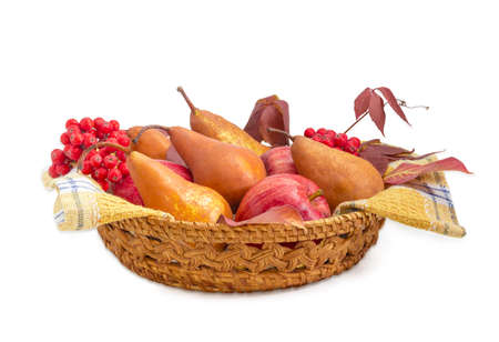 Several European pears and red apples on a cotton checkered napkin, bunches of rowan and branch of ivy in a small wicker basket on a light background