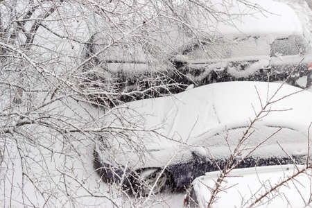 Top view through the trees branches of the parked cars covered with snow during heavy snowfall