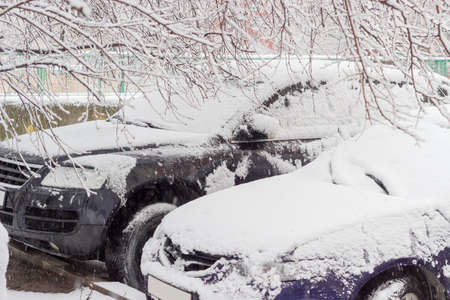 Front parts of the two cars under tree branches covered snow during heavy snowfall