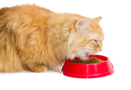 alimentacion balanceada: Red cat closeup, eat pelleted dry cat food from a red plastic bowl on a light background