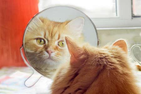 赤猫には、慎重に探して、丸い鏡クローズ アップでの反射 写真素材