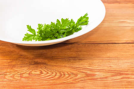 potherb: Background of fragment of a white dish with bunch of fresh green parsley closeup on an old wooden surface