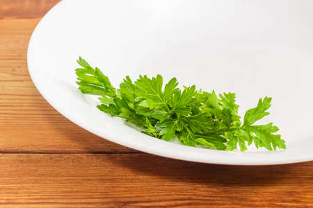 potherb: Background of fragment of a white dish with bunch of fresh green parsley closeup on a wooden surface  Stock Photo