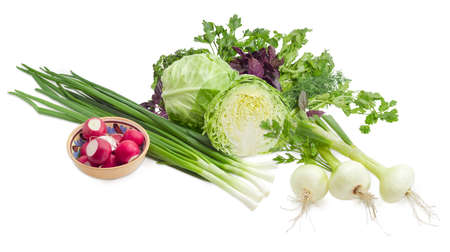 potherb: Young fresh white cabbage, stalks of the green onion, young bulb onions, bowl with red radish against the background of a bunch of the cilantro, parsley and basil on a light background