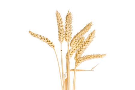 Several stalks of the ripe wheat with the ears on a light background