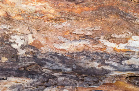 sapless: Background of the old trunk of the withered fruit tree covered by cracks and darkened with time