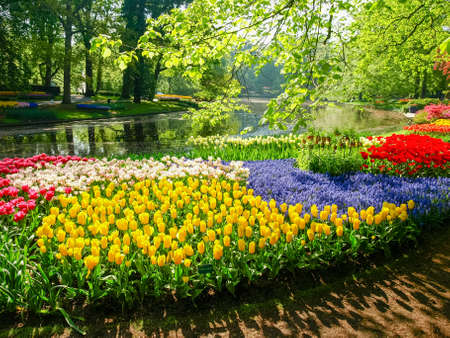 Flowerbed of the tulips of the different colors and other flowers on the shore of the reservoir in Keukenhof Park