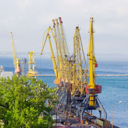 latticed: Group of the different harbor cranes on the quay of the sea cargo port against the background of the sea bay