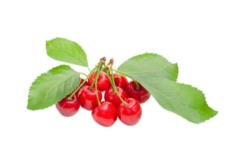cultivating: Several ripe sweet cherries with the stalks and leaves on a light background
