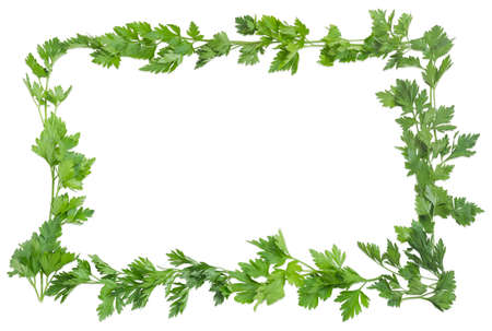 potherb: Background of the parsley twigs laid out around the perimeter in the form of a frame with empty central part on a light background
