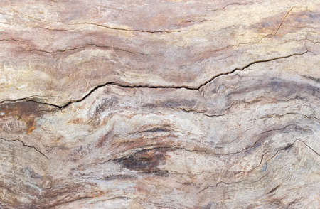 shrunken: Background of the old trunk of the withered fruit tree covered by cracks and darkened with time