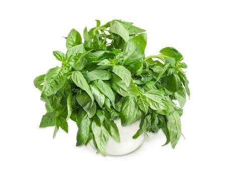 Bunch of the green basil freshly picked out in a white mug closeup on a white background