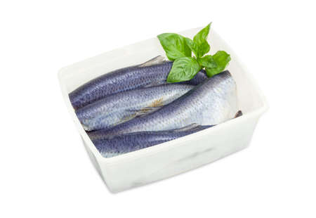 Several carcasses of the salted Atlantic herring without of heads and tails and basil twig in a plastic container on a white background  Stock Photo