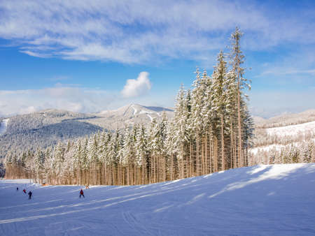 groomed: Ski slope among spruce forest on a background of mountain ranges and sky on ski resort in Carpathian Mountains  Stock Photo